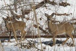 Two young deer, healthy, conserved and composed, welcome me on my walk this day.