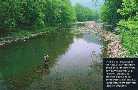 The Elk River flows out of the Appalachian Mountains and is one of the few rivers in West Virginia with wild rainbows, browns and brookies.  But due to lax environmental protection, a sewage treatment plant may soon run through it.  <i>Photograph by King Montgomery.</i>